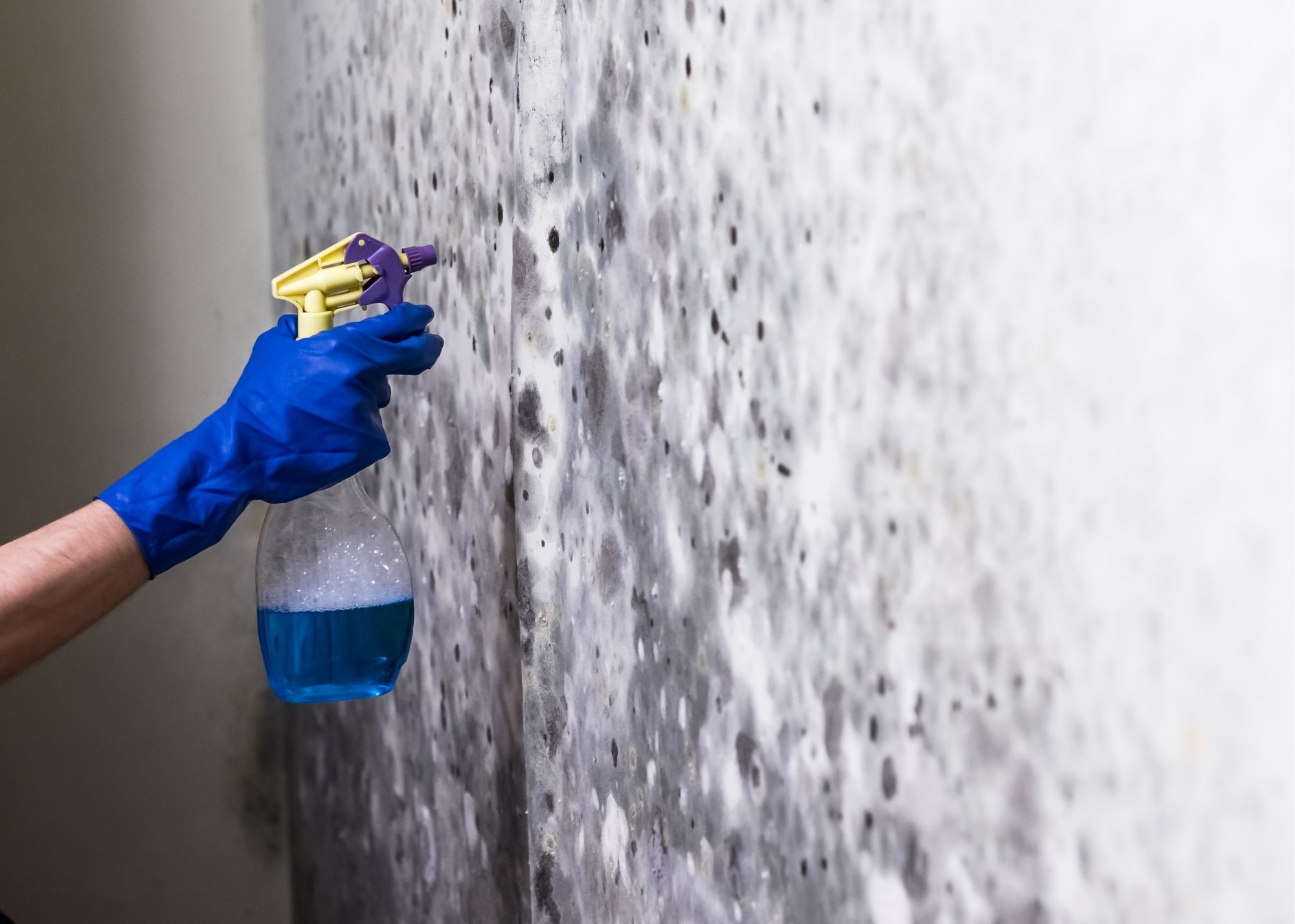 mold removal in Boise ID