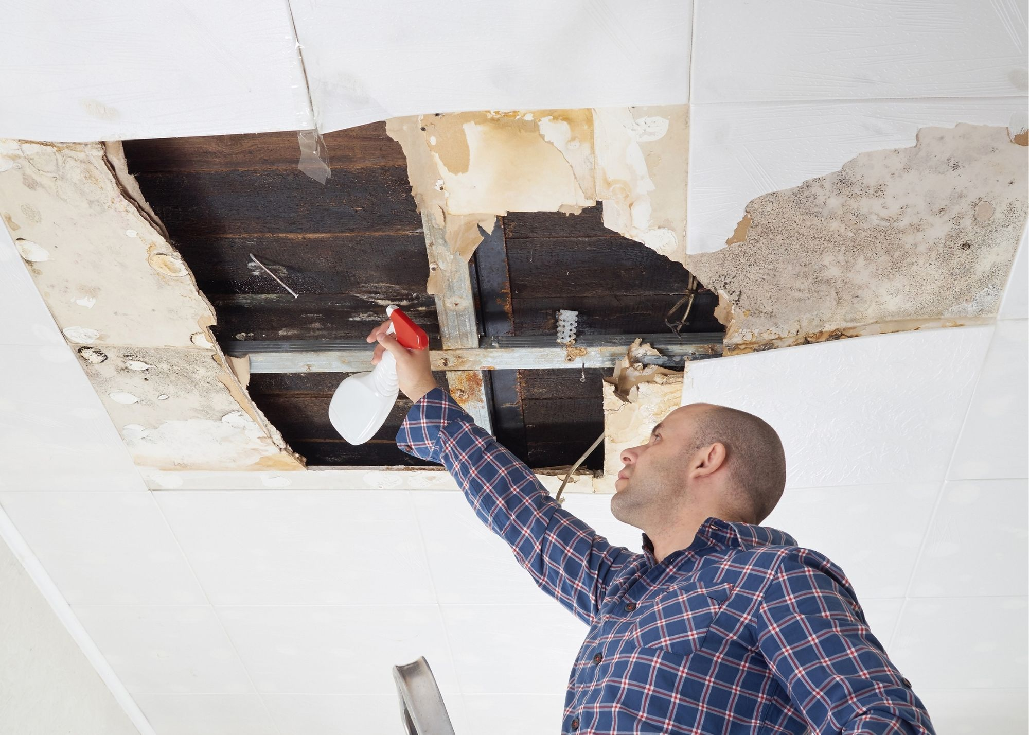 mold removal Boise